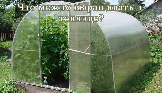 Что можно выращивать в теплице?